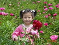 中川牡丹园游客和牡丹花合影