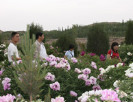 中川牡丹园游客