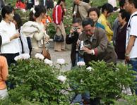 中川牡丹园摄影爱好者拍摄牡丹花