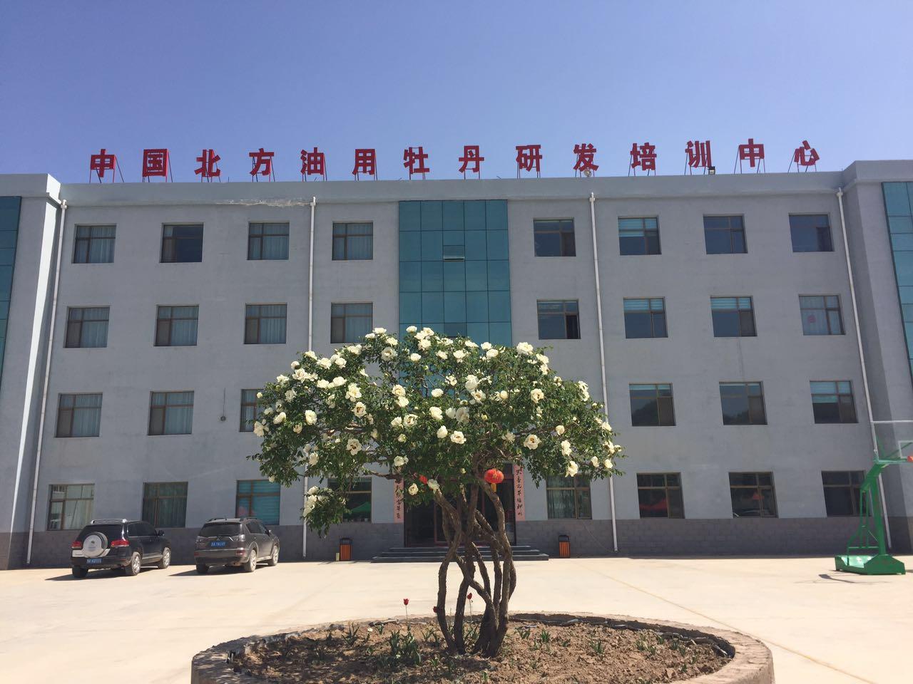 中川油用牡丹产业发展和扶贫攻坚迎来大好时光