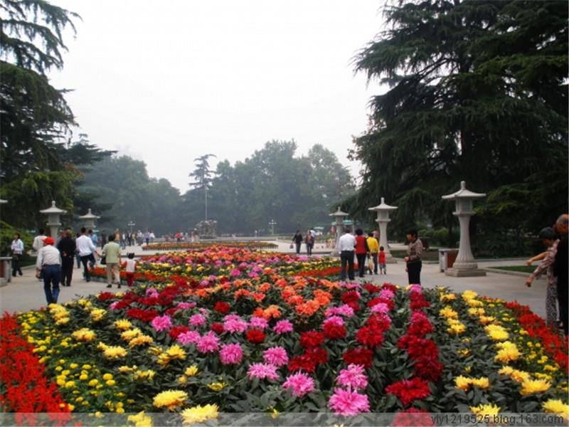 甘肃临洮大丽花品种展示