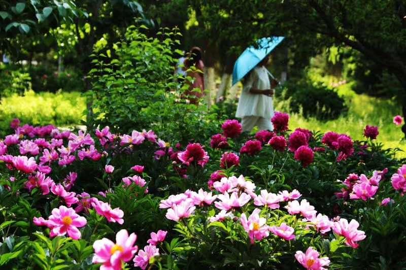 中川牡丹文化旅游节告知书,请朋友们仔细阅读哦!